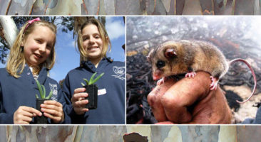 Biodiversity of the Murray Catchment Education Kit