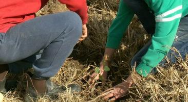 Tree Planting Activities