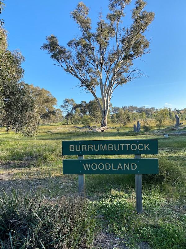 Burrumbuttock Woodland